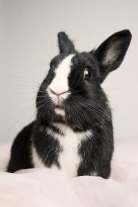 bunny-435170_640